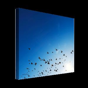 Foto op canvas - 2cm frame